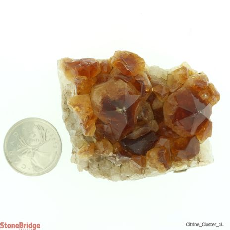 "Citrine Cluster Size #1L - 1 1/2"" to 2"""