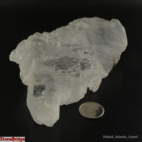 Selenite Fish Tail Crystals - Size #2 - 300g to 500g